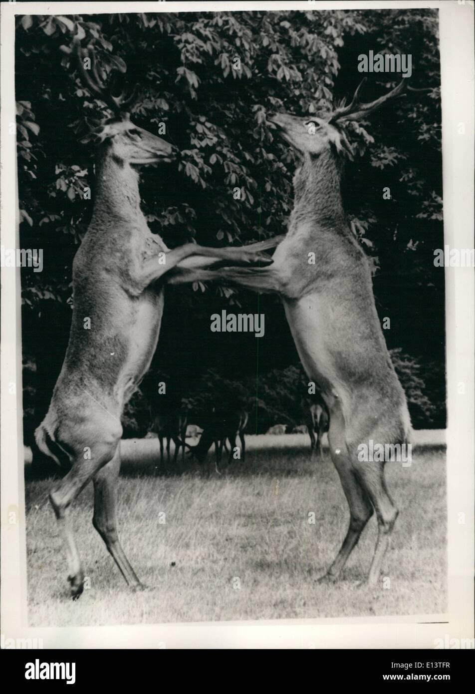 """27. März 2012 - Liebe - Hirsch. """"Shall we dance?"""". Suchen Sie viel, als ob sie sich eines Walzers erfreuen - oder es, ein Tango sein könnte - ein Stockbild"""