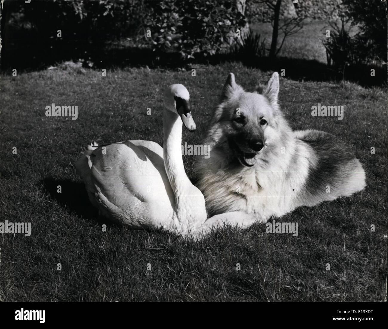 27. März 2012 - Umstände In Normal jeder Hund, der bekommt innerhalb picken Palette von Schwan bittet für Ärger. Aber Pavlova der Schwan und Pascha der elsässischen waren Freunde seit beide sehr jung waren. Pavlova, wurde als eine winzige Cygnet gefunden von einem R.S.P.C.A Inspektor zappelte im Wasser, sie hatte offenbar von ihrer Mutter Rücken gefallen und hatte aufgegeben. Er nahm sie mit einem Experten für Bir 0care, Brenda Marsaulyt, wer in ihrem Haus in Budleigh Road, Exmouth, Devon, kümmert sich um 150 gerettet, verletzt oder aufgegeben Vögel. Pascha war damals nur ein Welpe Stockbild