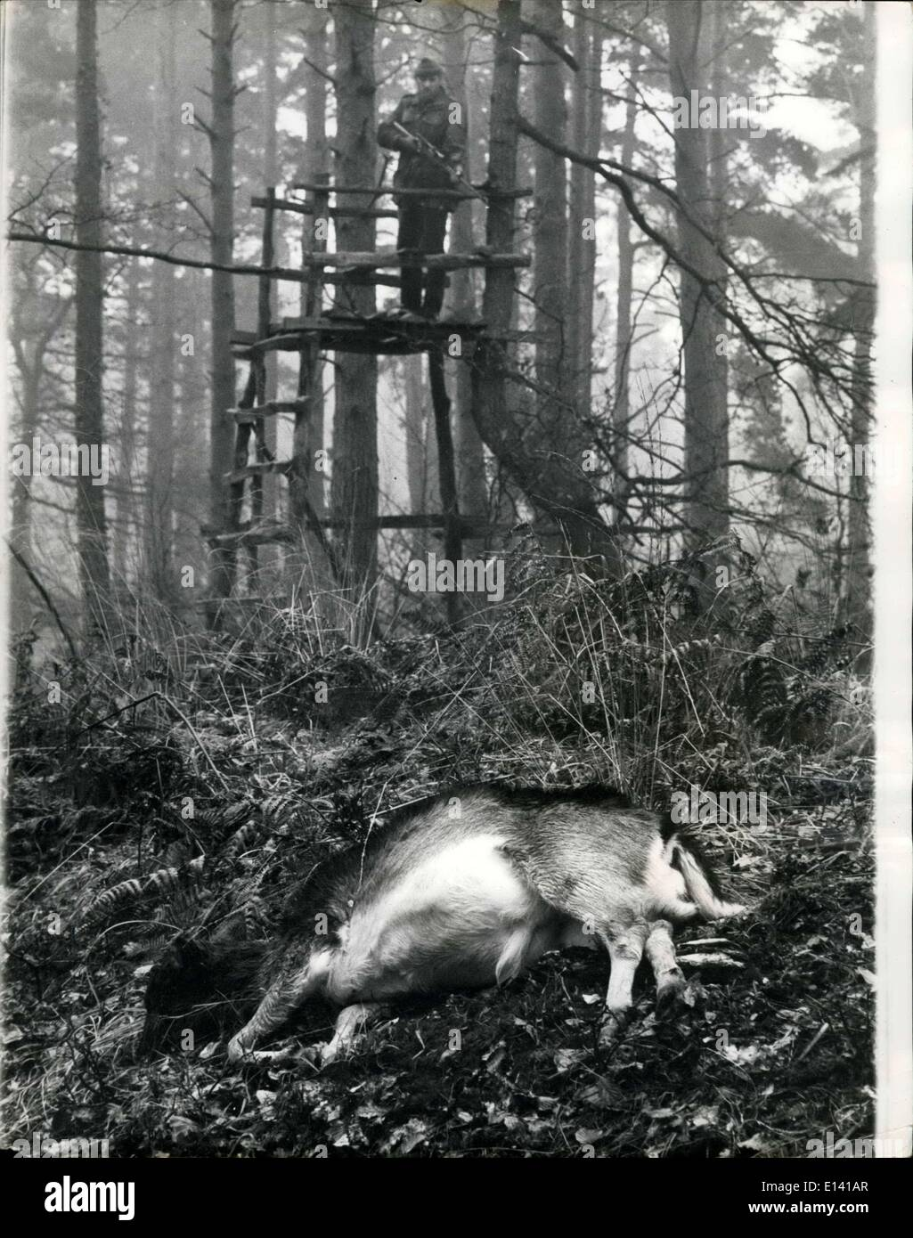 31. März 2012 - musste das Reh, das sterben: Die harte Hirsche im New Forest müssen jedes Jahr in ihrem eigenen Interesse verdünnt werden. Und der Tod kommt schnell, menschlich. Eigentlich war der Hirsch in die Bilder ein Opfer seiner eigenen Torheit. Er wurde erschossen, Schönheiten, die er junge Bäume und der Rest der schwer zerstörte von folgenden Anzug abgeraten werden musste. In der Regel nur die gamed kranke oder schwache Mitglieder der Herde werden getötet, wenn Herden spektakulär sind. Die Maksman war Fred Cartier, der Förster Kommission Spiel für England und Wales Stockbild