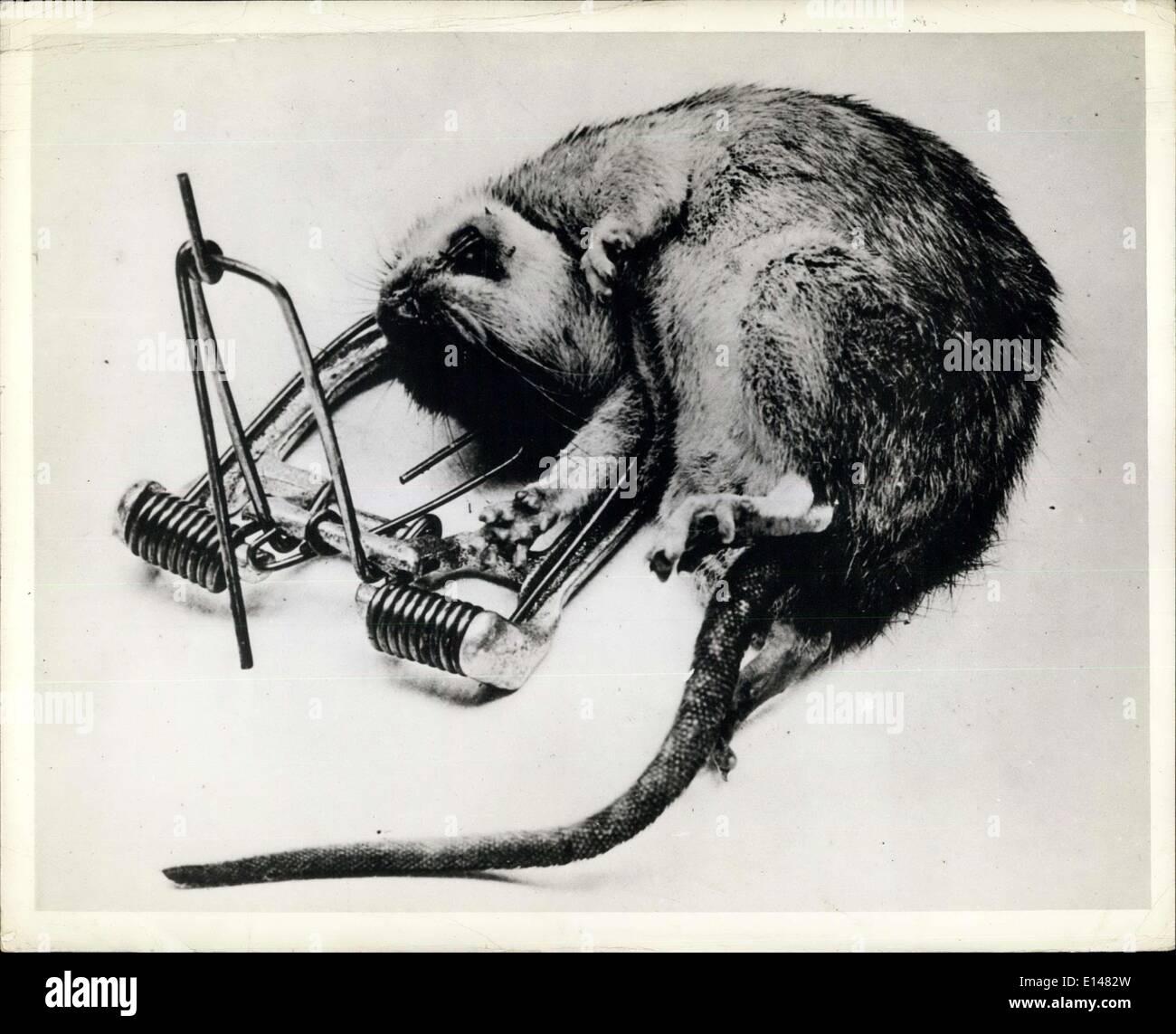 The Black Rat Press Stockfotos & The Black Rat Press Bilder - Alamy