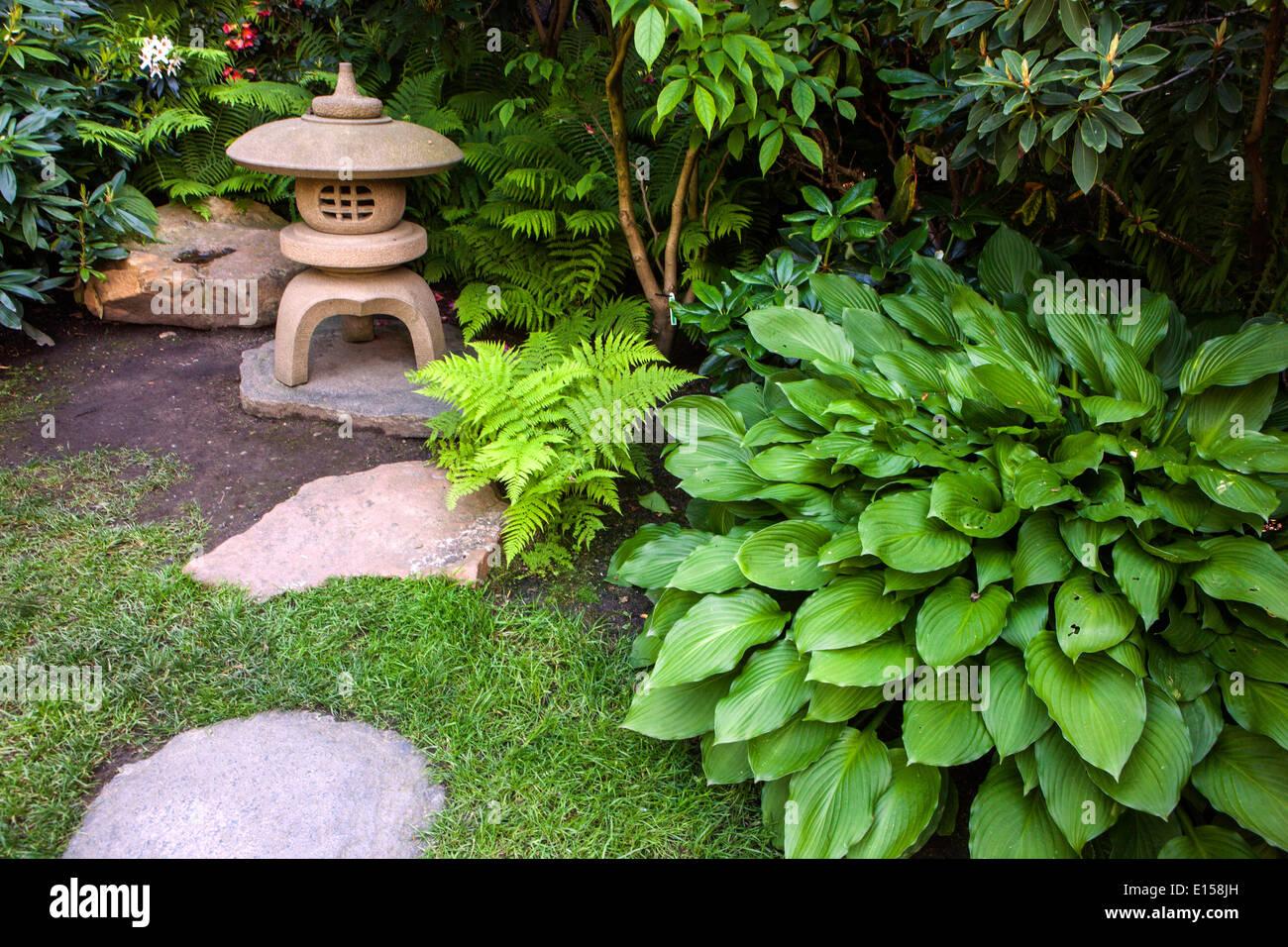 Hosta, Pflanzen für den schattigen Teil des Garten, japanische ...