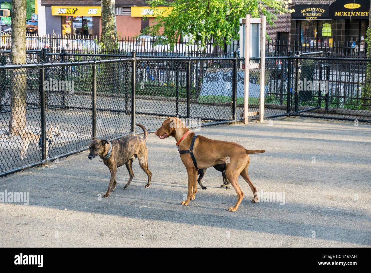 2 Hund Lauft Getrennt Von Zaun Zu Grossen Klein Wenig Platz Fur