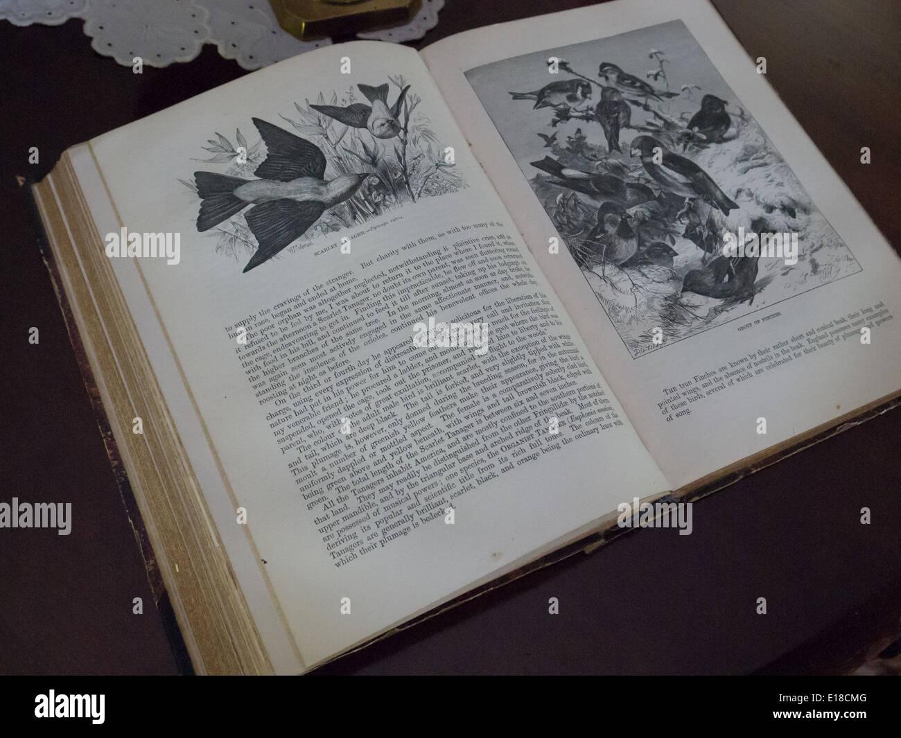 Vintage Buchseite Stockbild