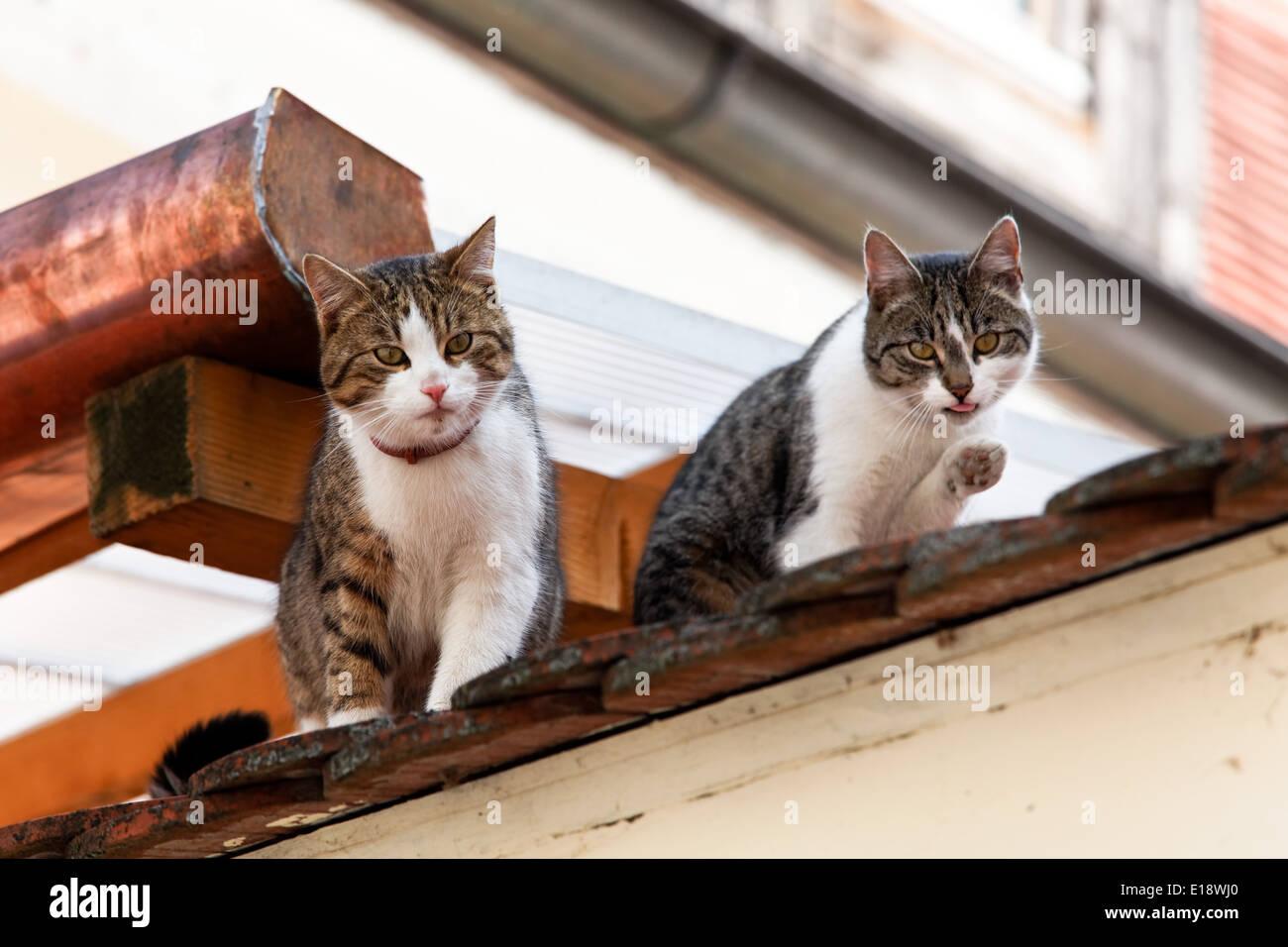 Fantastisch Eins Zwei Von Katze 5 Draht Ideen - Die Besten ...