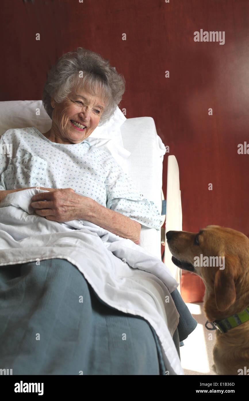 Therapiehund besucht eine Seniorin Patienten n Krankenzimmer. Stockbild