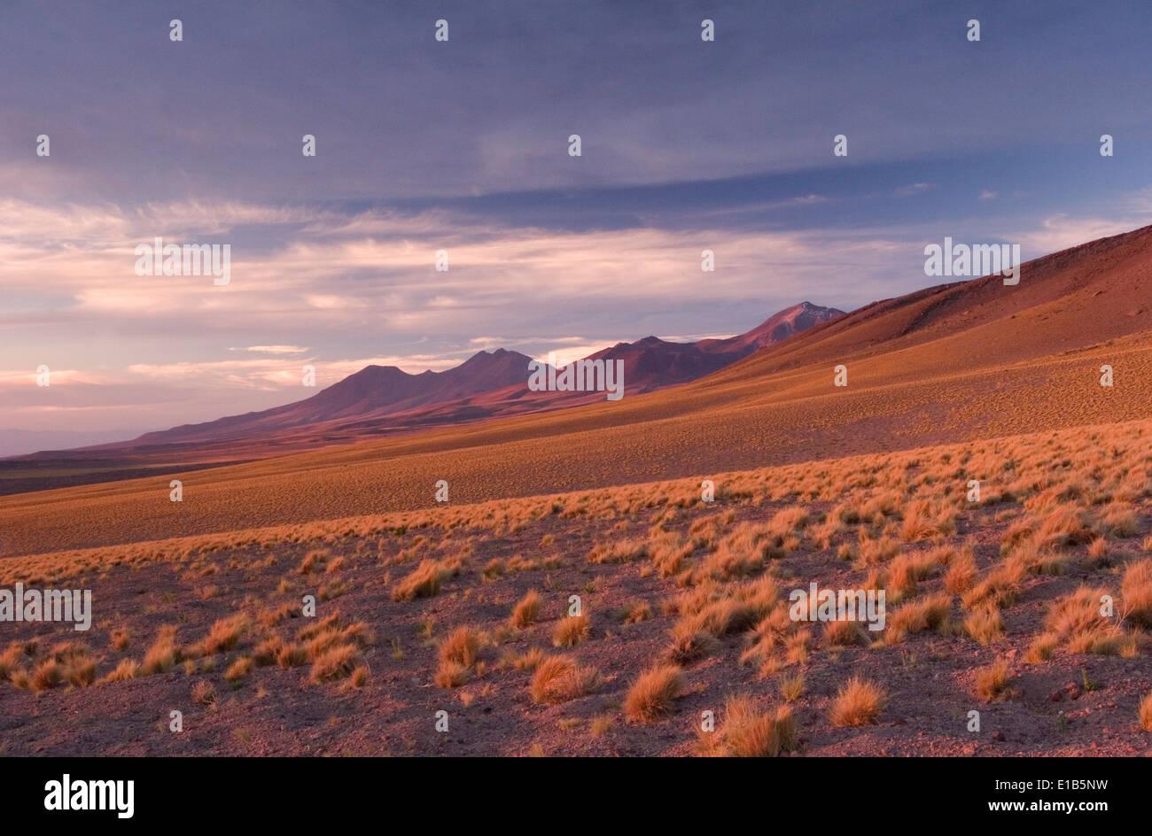 Gräser, Landschaft und Vulkane in der Nähe von Socaire, Chile Stockbild