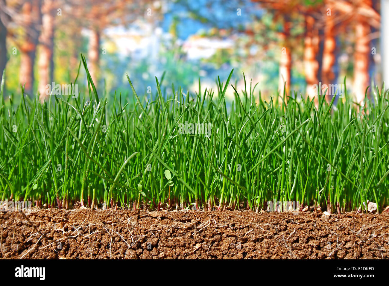 sown grass stockfotos sown grass bilder alamy. Black Bedroom Furniture Sets. Home Design Ideas