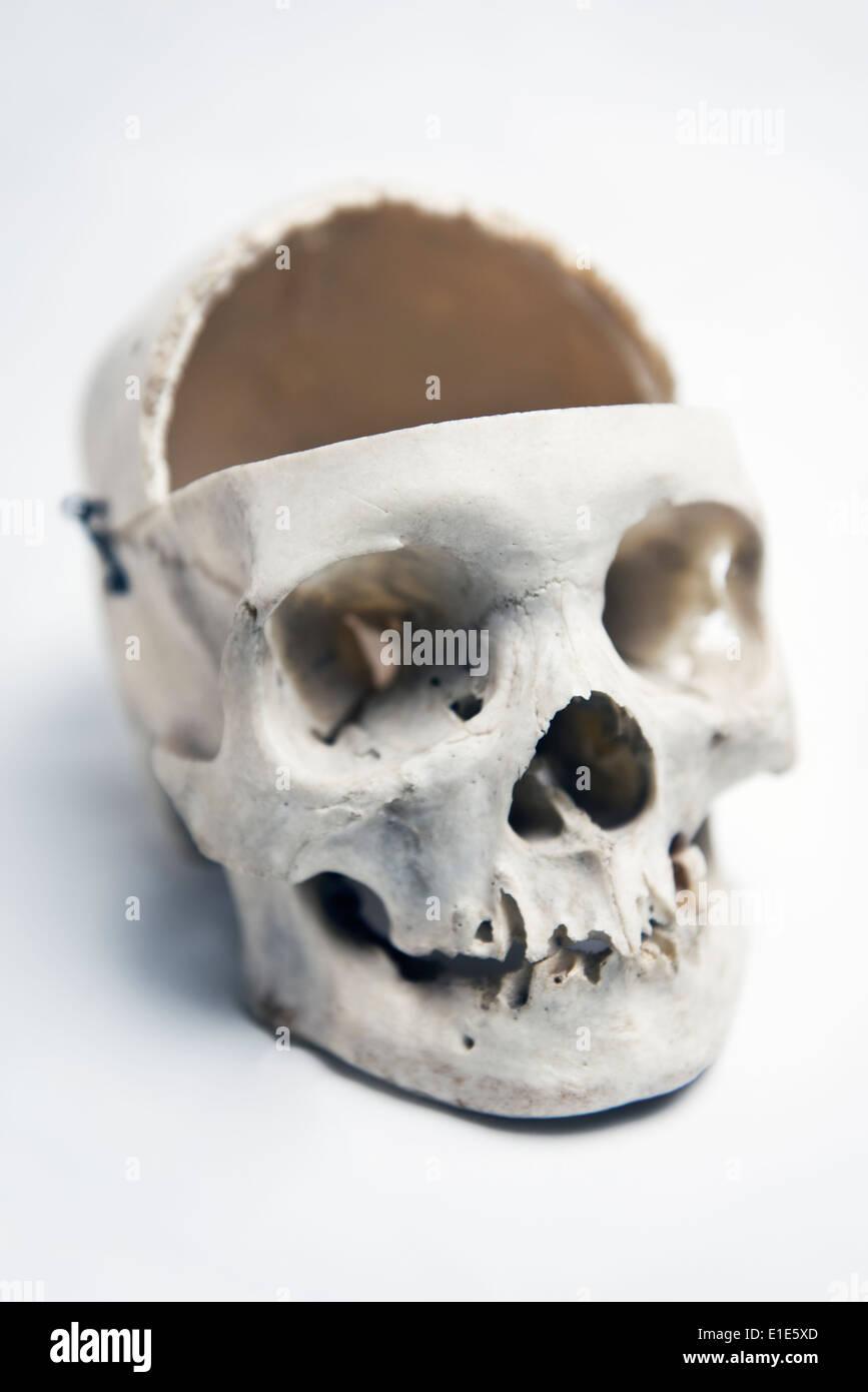 echtes menschliches skelett kaufen