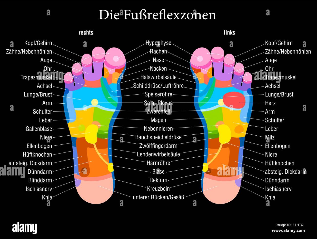 Groß Herz Diagramm Beschriftet Fotos - Menschliche Anatomie Bilder ...