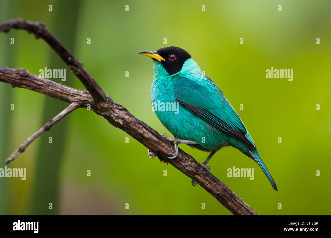 Atlantic rainforest stockfotos atlantic rainforest bilder alamy - Epiphyten zimmerpflanze ...