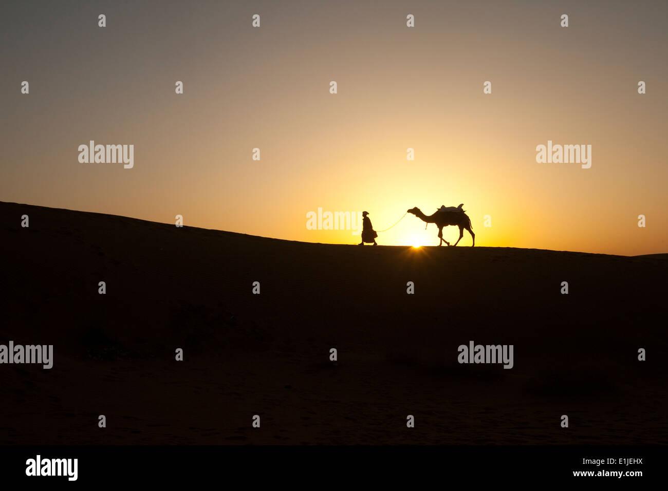 Mann geht mit Kamelen bei Sonnenuntergang in der Wüste Thar, einlaufendes, Indien Stockbild