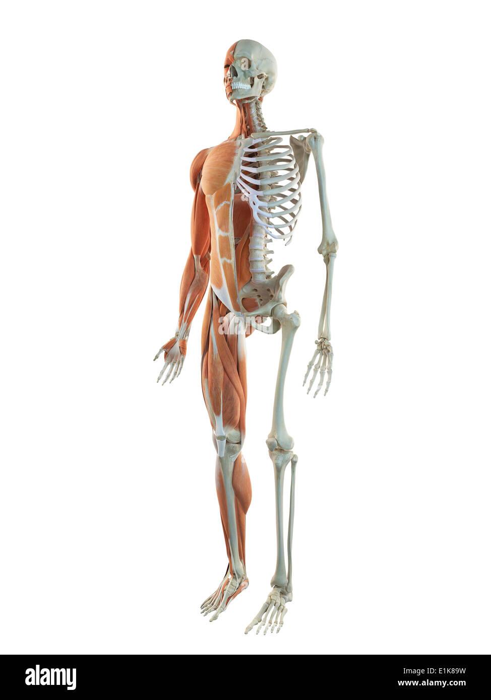 Niedlich Zeichnung Schneide Anatomie Bilder - Anatomie Ideen ...
