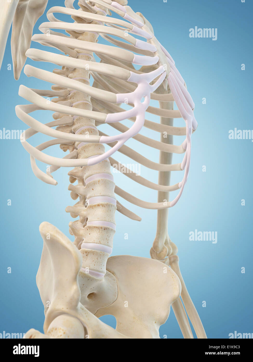 Fein Skelett Struktur Galerie - Anatomie Ideen - finotti.info