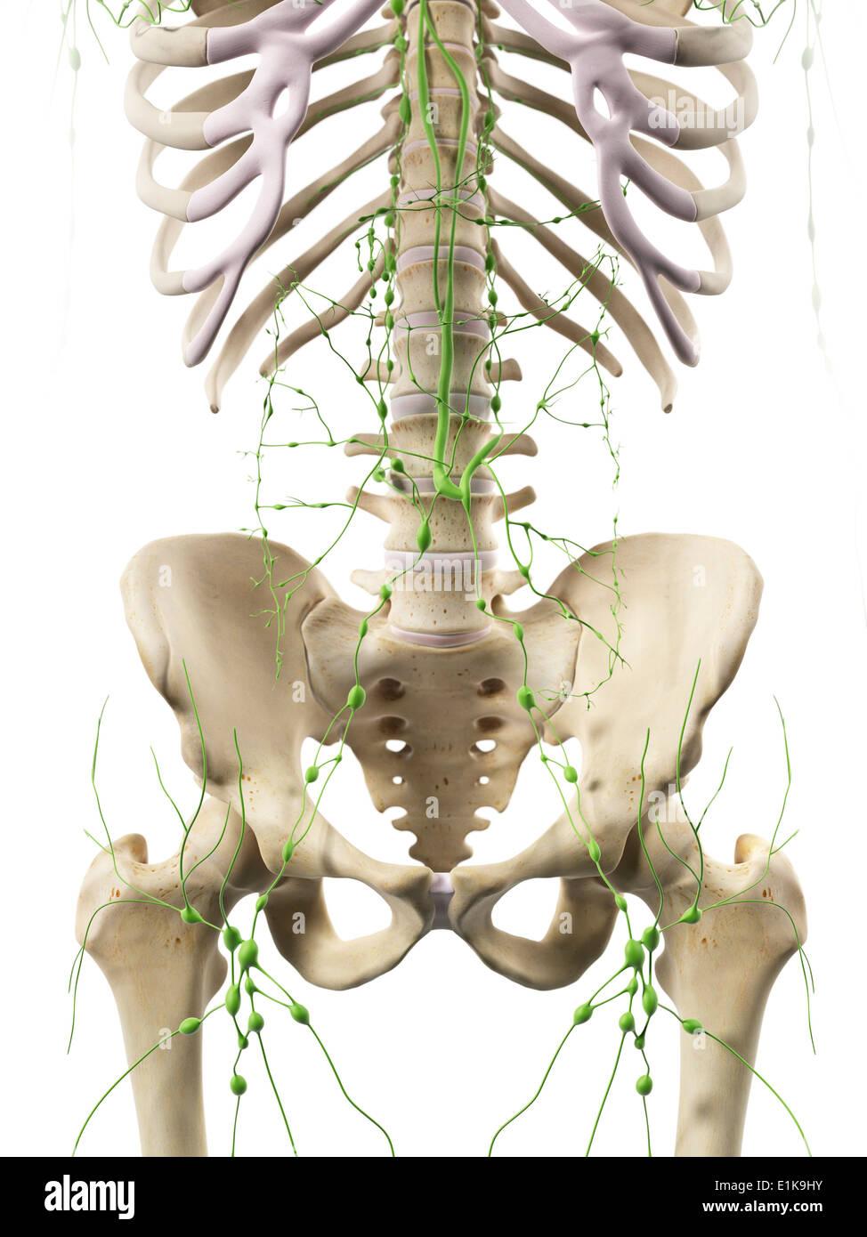Niedlich Lymphknoten Auf Körperkarte Ideen - Menschliche Anatomie ...