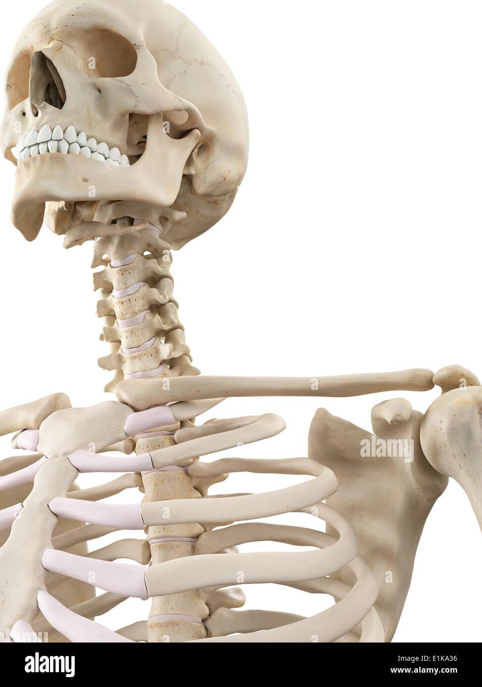 Großzügig Interaktive Menschliche Körpersysteme Fotos - Menschliche ...