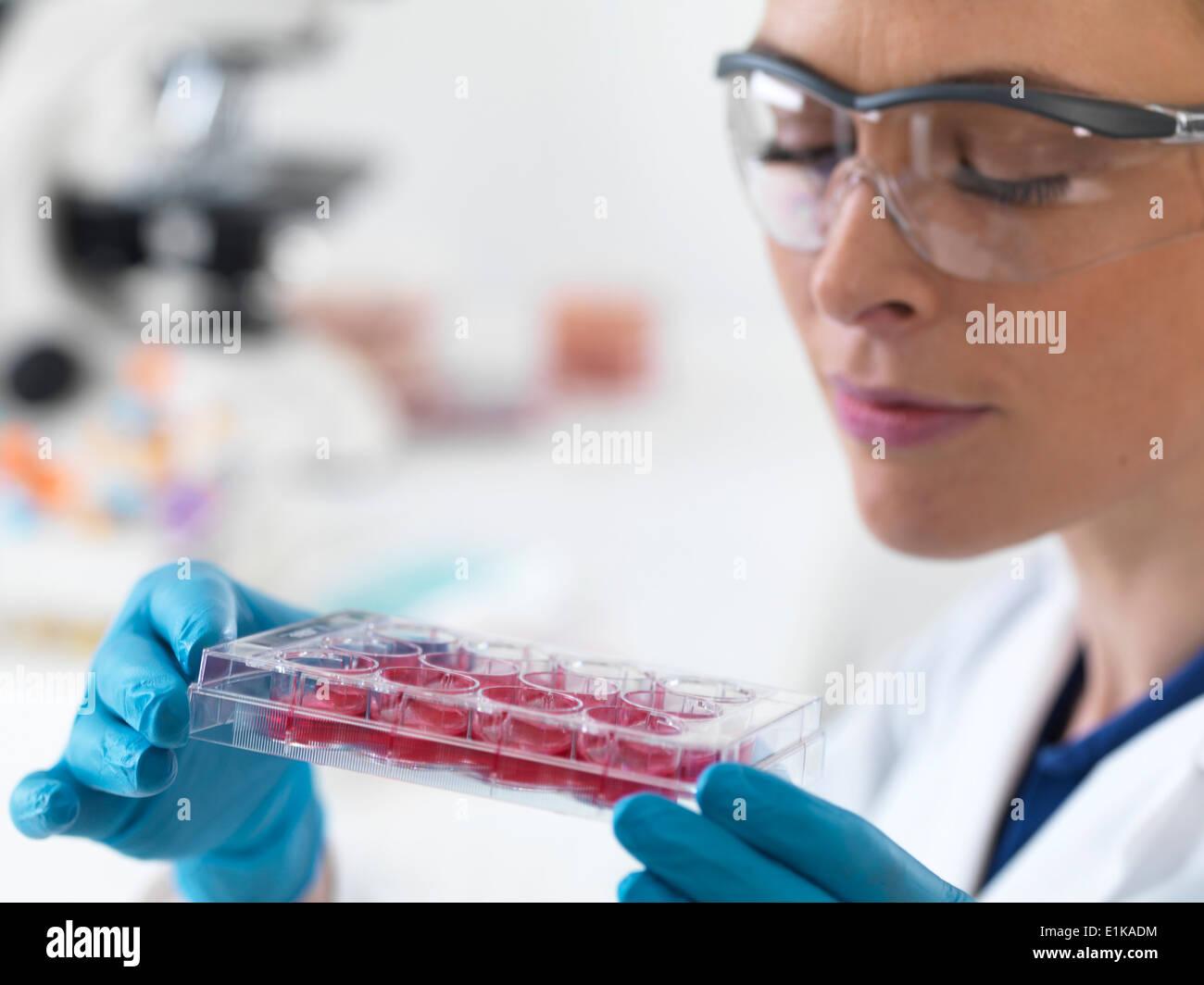 Wissenschaftlerin mit einem multiwell Tablett mit Stammzell-Proben. Stockfoto
