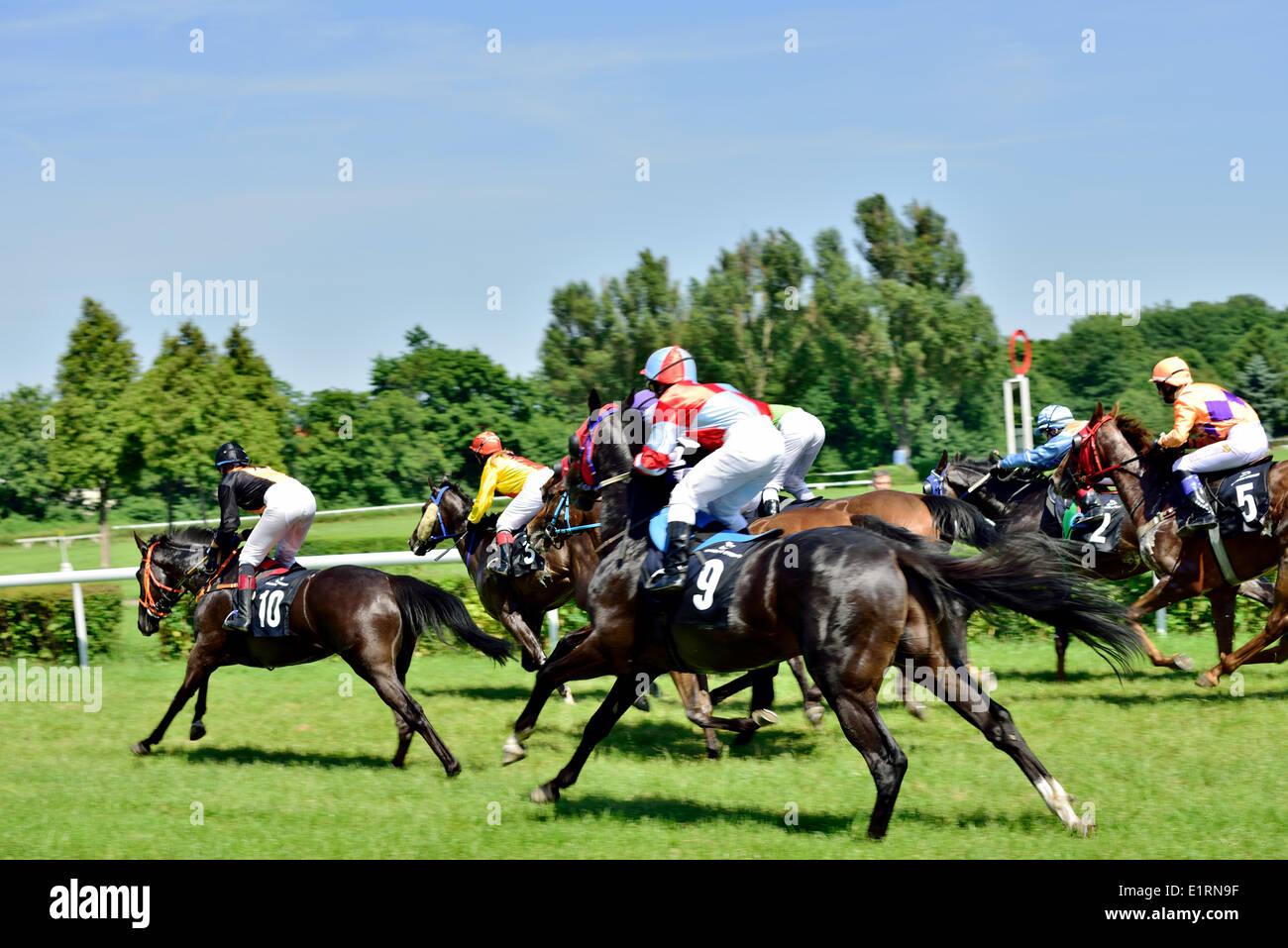 Wroclaw, Polen. 9. Juni 2014. Obamas Tag an der Strecke Partenice, Rennen für 3-jährige Pferde nur Gruppe III in Breslau am Juni 8, 2014. Rennsiege Pferd Zucchero mit der Nummer 2. Stockbild