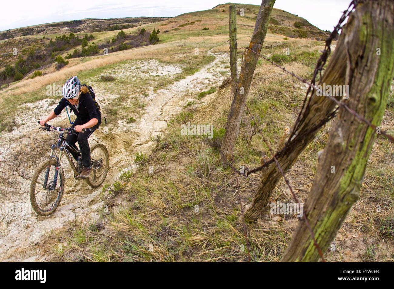 Ein weibliche Mountainbiker folgt eine perfekte Band aus Singletrails. Maah Daah Hey Trail, North Dakota Stockbild