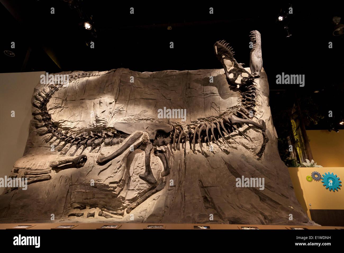 fossil bone stockfotos fossil bone bilder seite 2 alamy. Black Bedroom Furniture Sets. Home Design Ideas