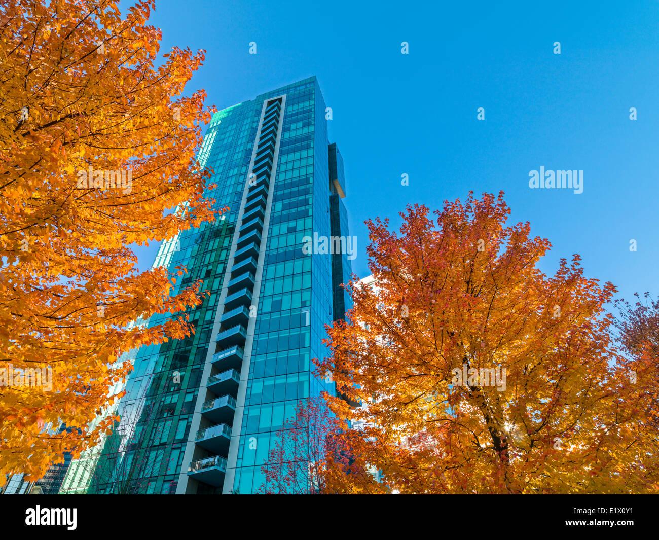 Vancouver Office Tower und Ahorn-Bäume im Herbst, Vancouver, Britisch-Kolumbien, Kanada Stockbild