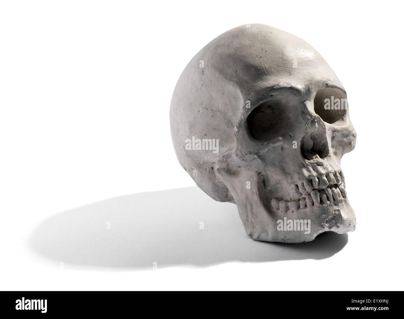 Modell eines menschlichen Schädels Stockbild