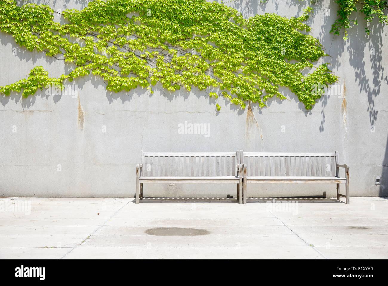 zwei Holzbänke vor Betonwand mit Reben Stockfoto, Bild: 70048351 - Alamy