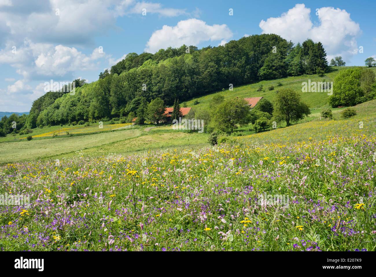 Gehöft mit Blume Wiese und Wald, Rhön-Biosphärenreservat, Sandberg, Gersfeld, Hessen, Deutschland Stockbild
