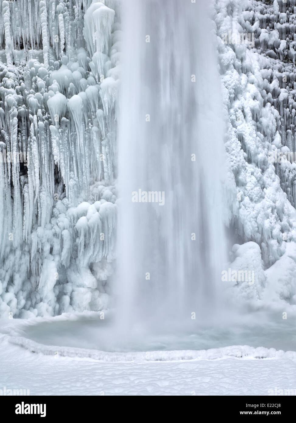 Nahaufnahme von Schachtelhalm fällt mit Eis und Schnee. Columbia River Gorge National Scenic Bereich, Oregon Stockbild