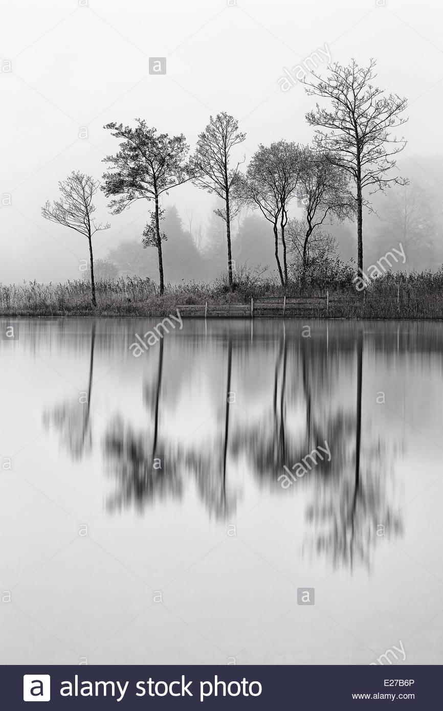 Loch Ard Baum Reflexionen Stockbild