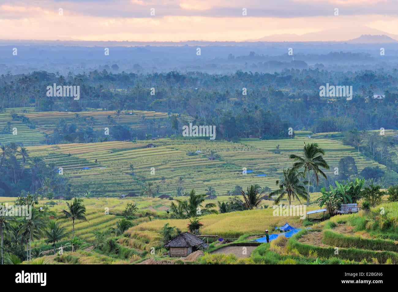 Indonesien, Bali, die Reisfelder von Jatiluwih Subak-System, als Weltkulturerbe der UNESCO, kooperative Wasserwirtschaft Stockbild
