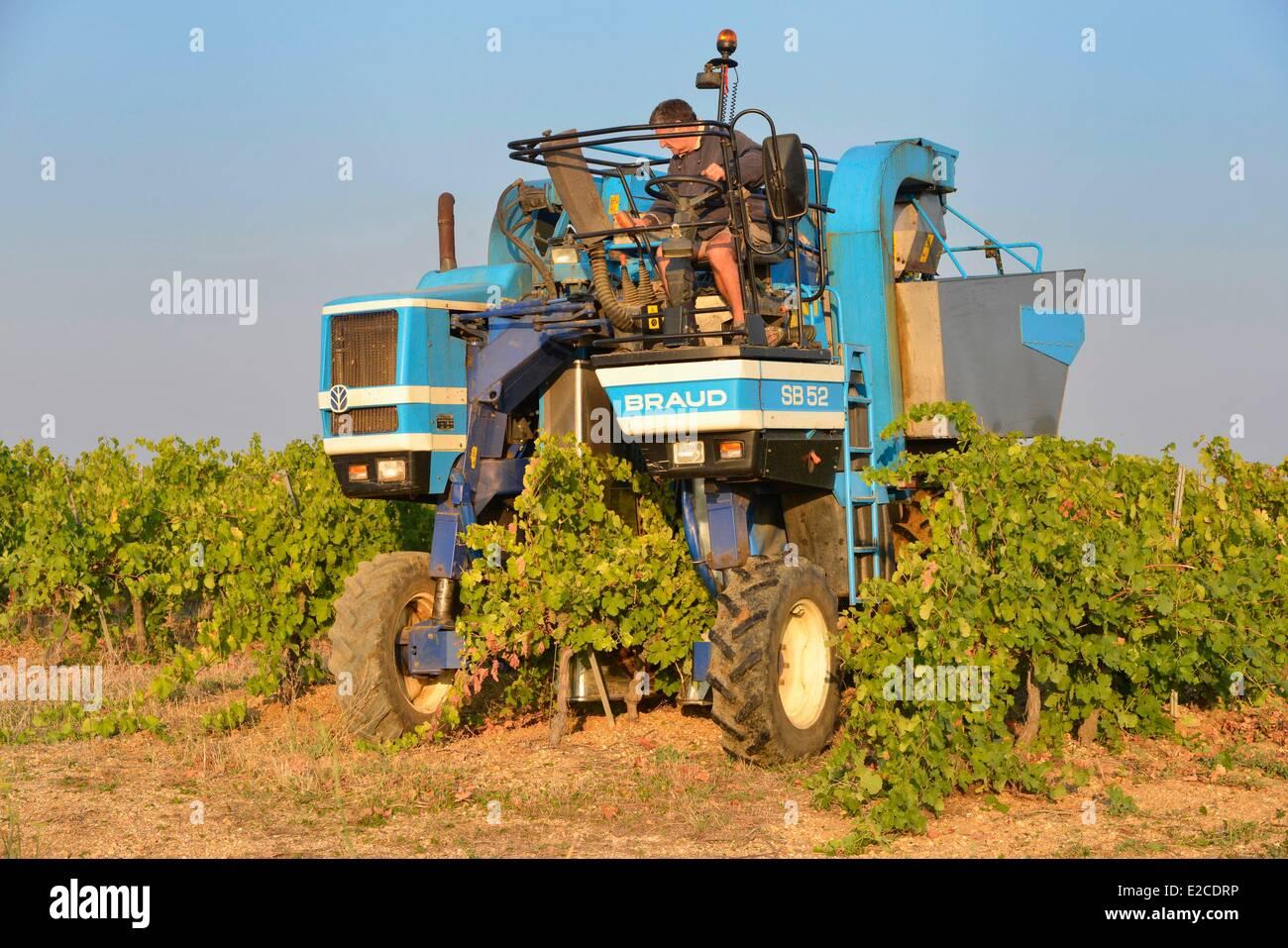 Frankreich, Herault, Boujan Sur Libron, Domain Haute Condamine, Weinberge des Languedoc, Traube harvester Stockbild