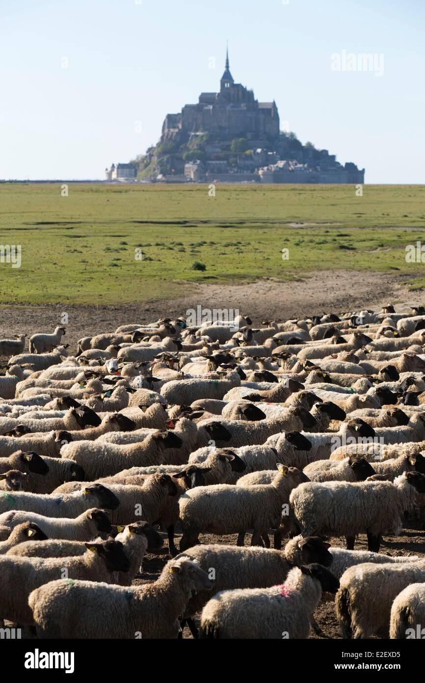 Frankreich-Manche Mont Saint Michel Bay aufgeführt als UNESCO-Welterbe gesalzene Sümpfe Schafe und Mont Stockbild