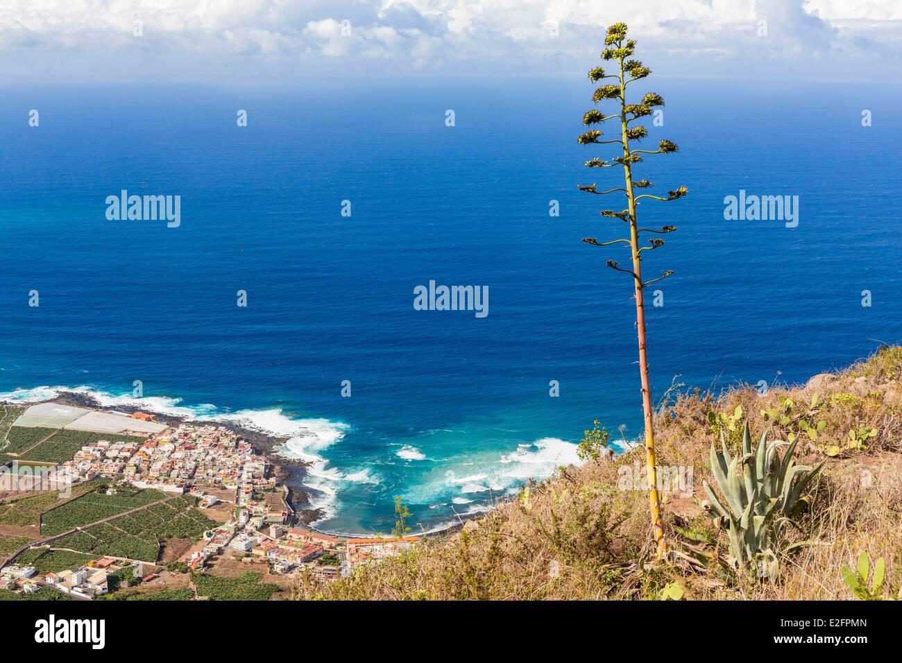 Spanien Kanaren Teneriffa Insel Adeje amerikanische Agave mit im Hintergrund La Caleta und Banane Stockbild
