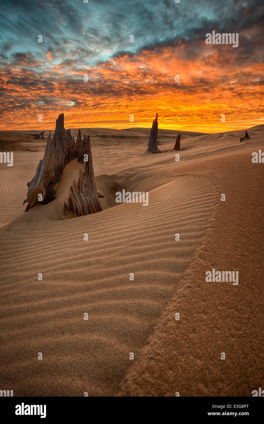 Morgendämmerung über Western Michigan Sanddünen, mit uralten Baum bleibt aus einer vergangenen Zeit. Stockbild