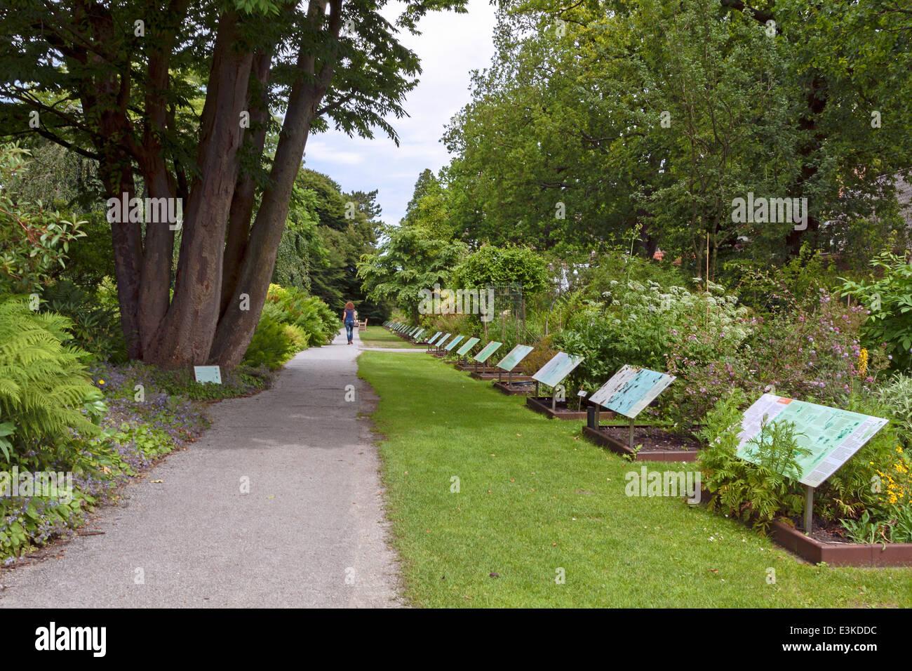 Botanische Tuin Leiden : Die systematische garten des hortus botanicus der botanische