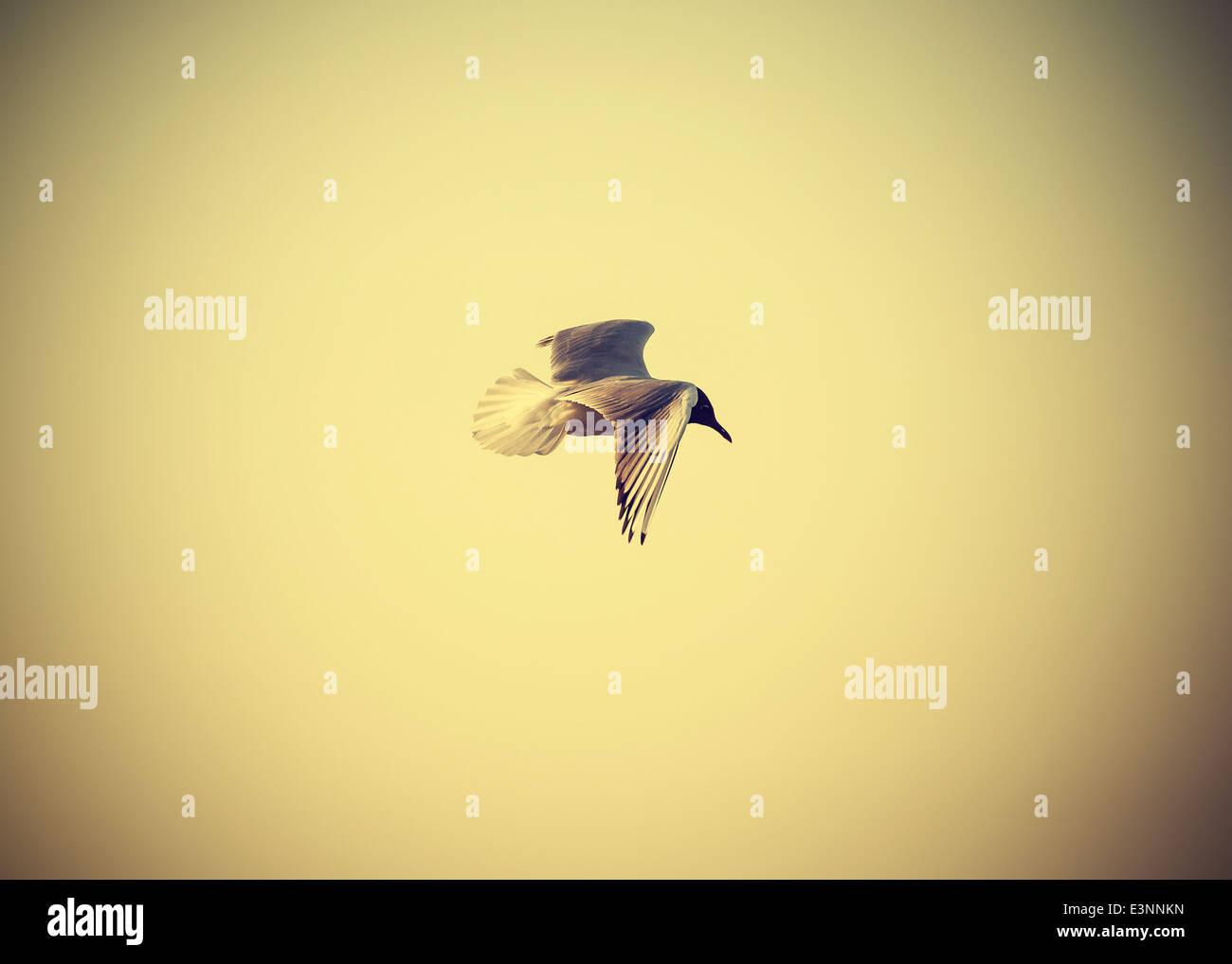 Gefilterte Vintage Retro Stil Vogel auf das Meer. Stockbild