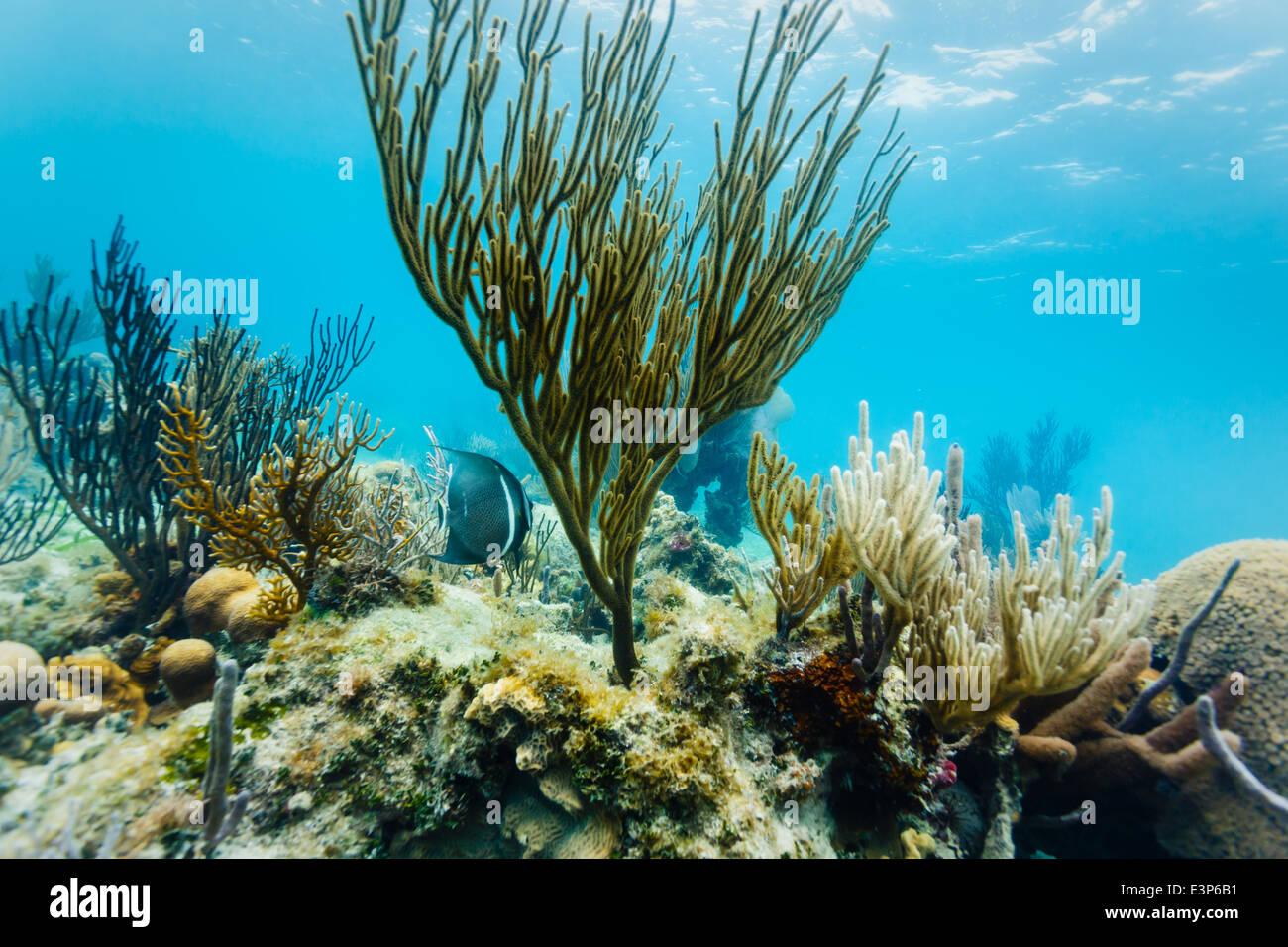 Unter Wasser Nahaufnahme von Meereslebewesen und Korallenformationen auf Korallen-Riff vor der östlichen Küste Stockbild