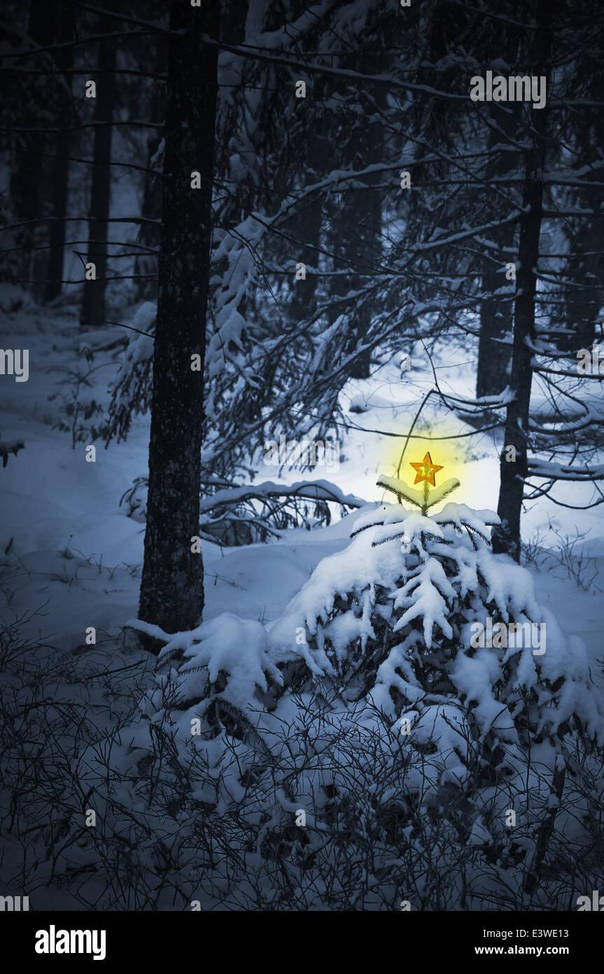 Weihnachten-Landschaft in einem verschneiten Wald Stockfoto, Bild ...
