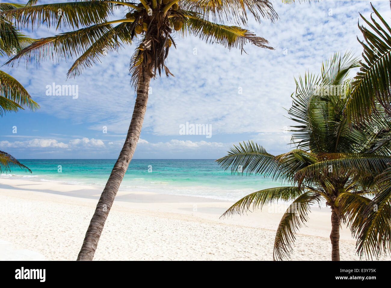Palmen und weißem Sand an der Riviera Maya Strand von Tulum, Mexiko. Stockbild