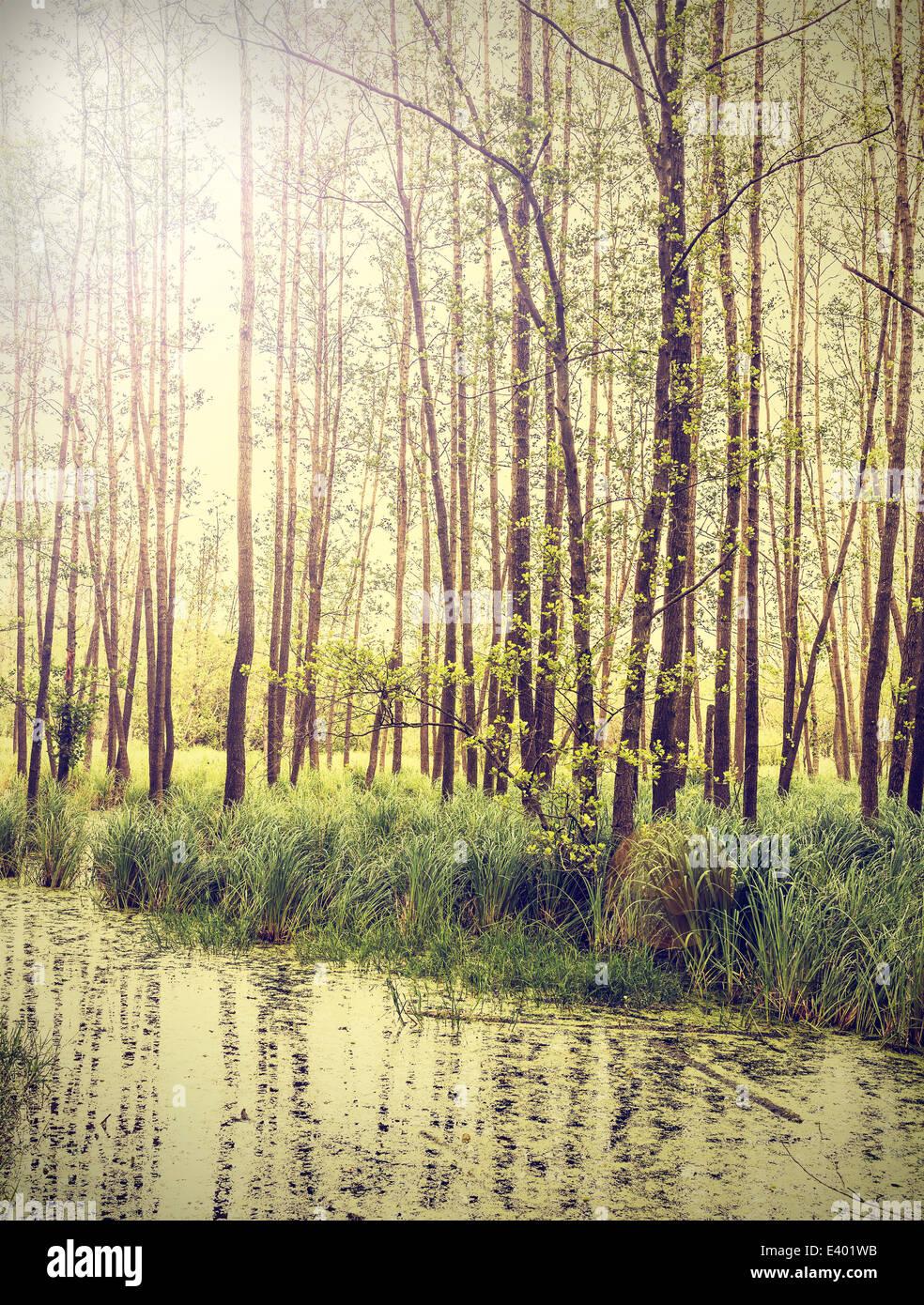 Friedliche Natur Vintage-Hintergrund. Stockbild