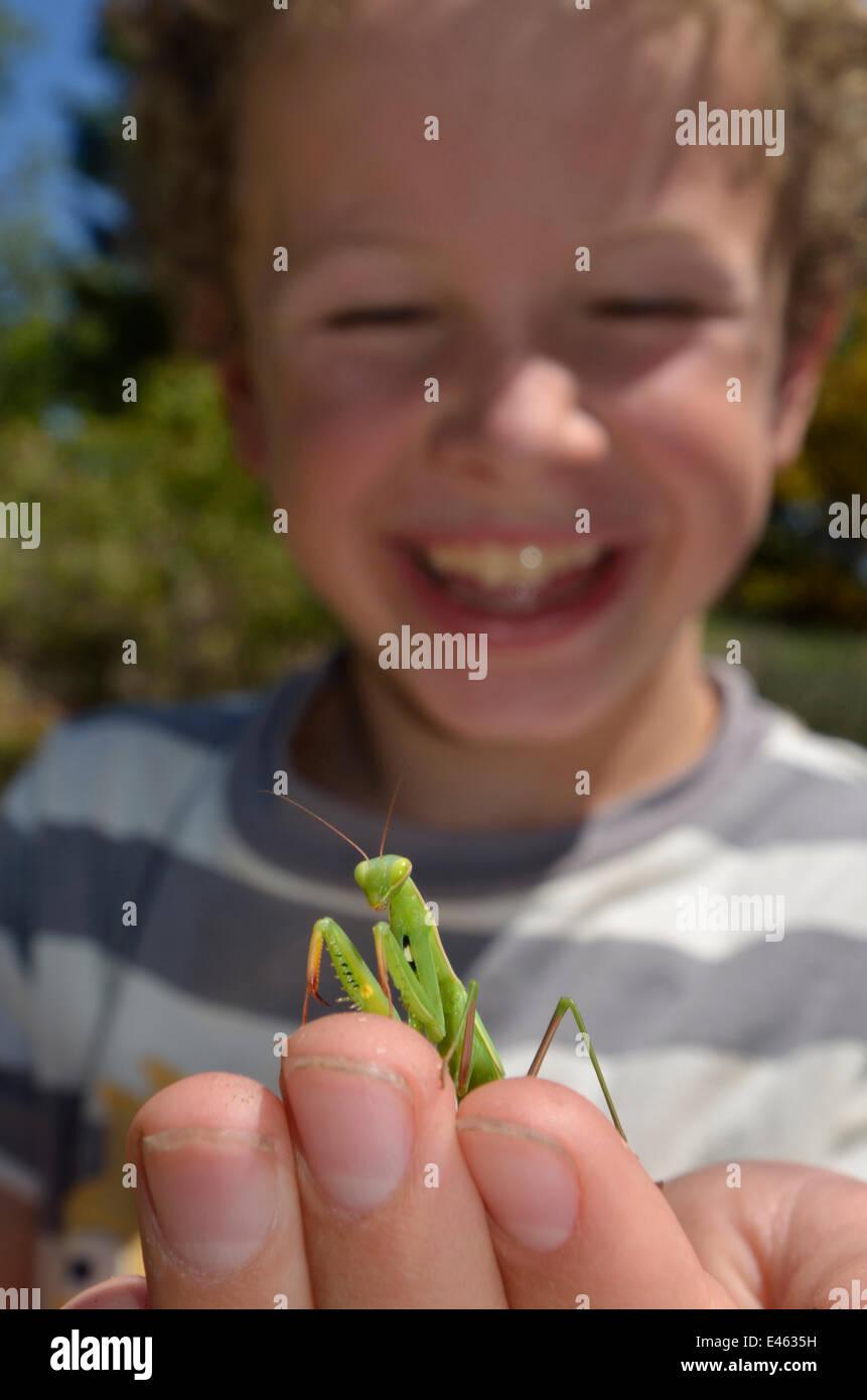 Kind mit einer Gottesanbeterin (Mantodea) auf der Seite. Frankreich, Europa, August. -Modell veröffentlicht. Stockbild