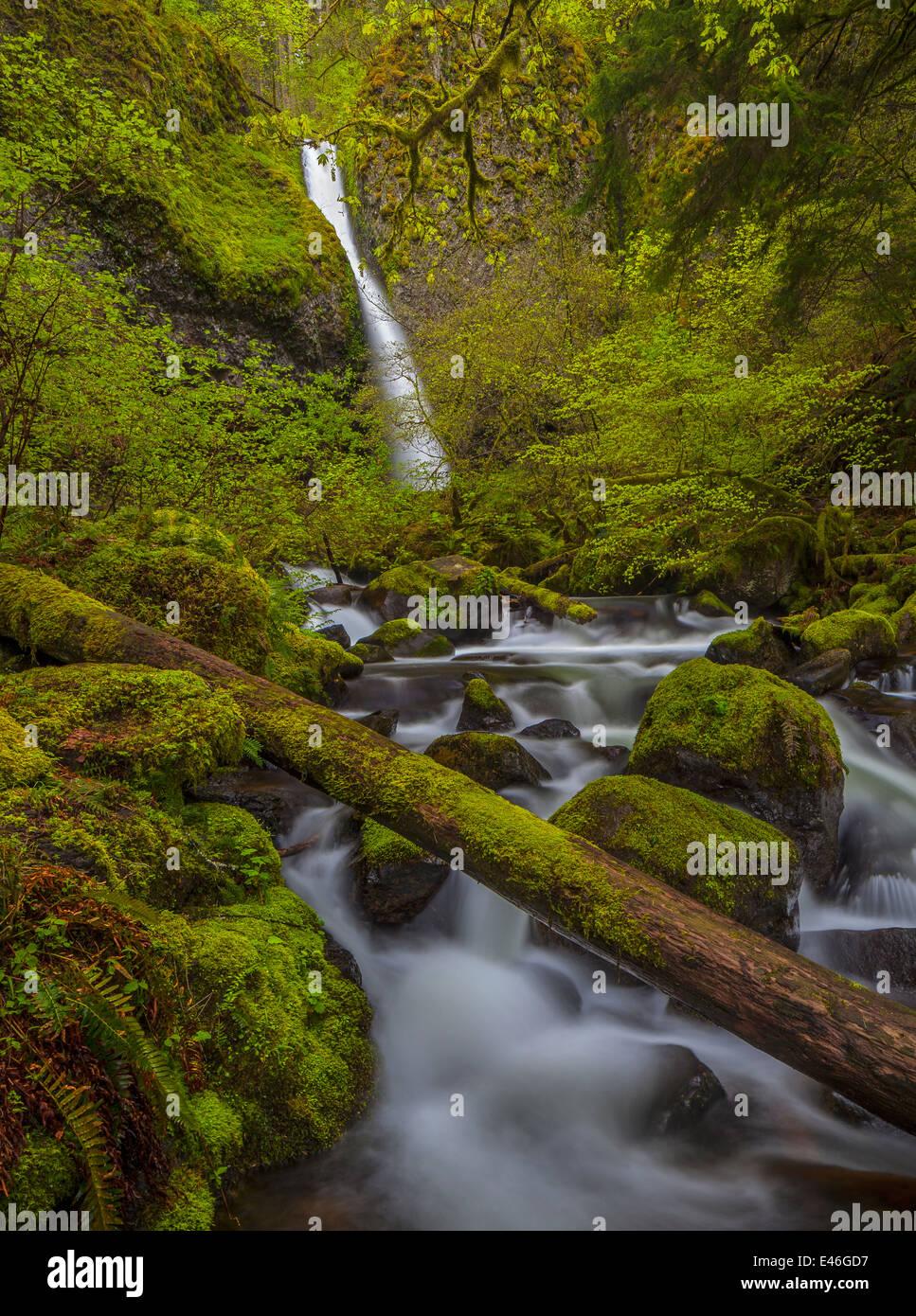 Columbia Gorge National Scenic Gebiet, OR: Pferdeschwanz fällt im Frühjahr Stockbild