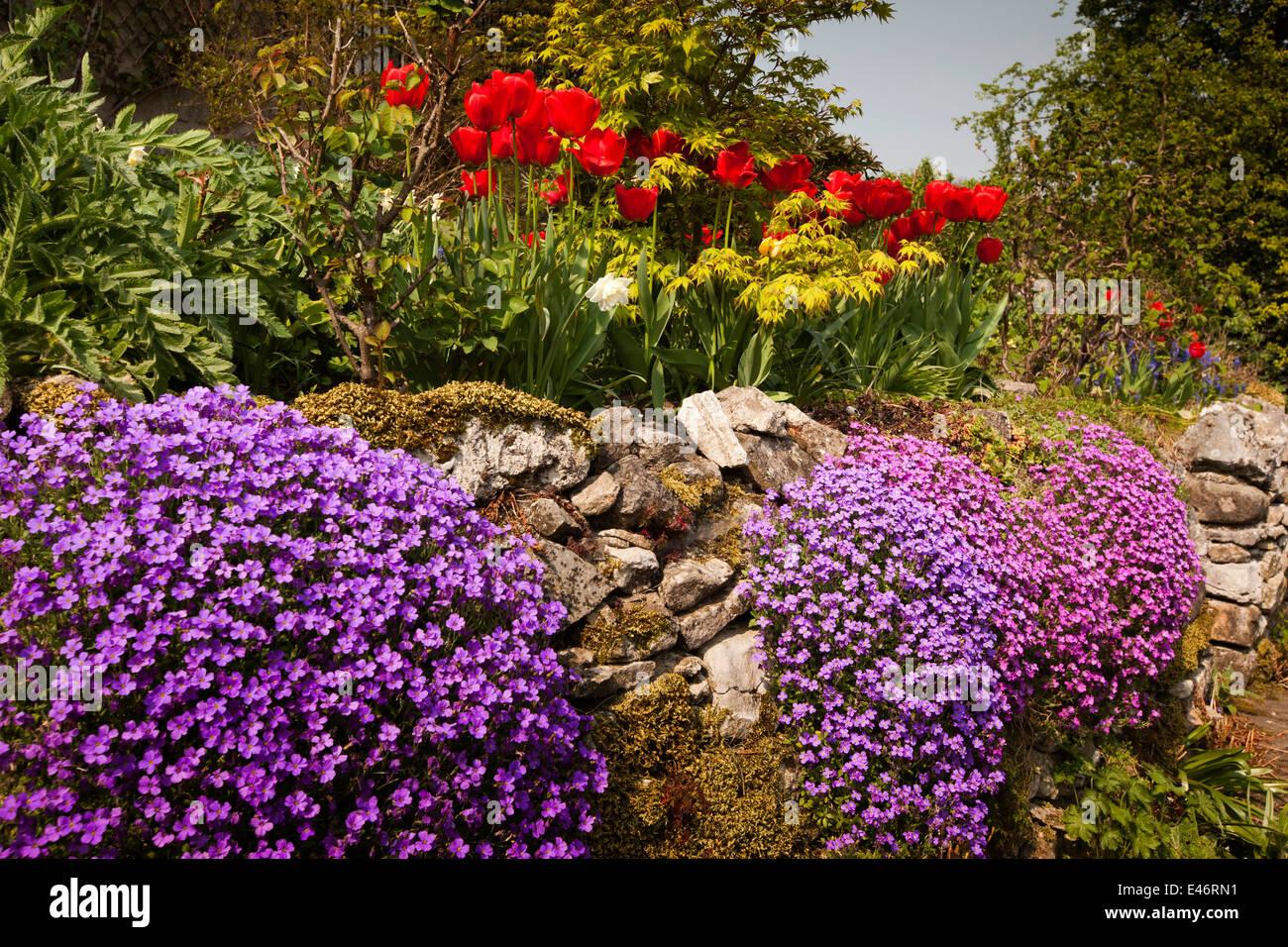 UK, Derbyshire, Peak District, Bakewell, bunte Aubretia Blumen in steil abfallenden Bauerngarten Stockbild