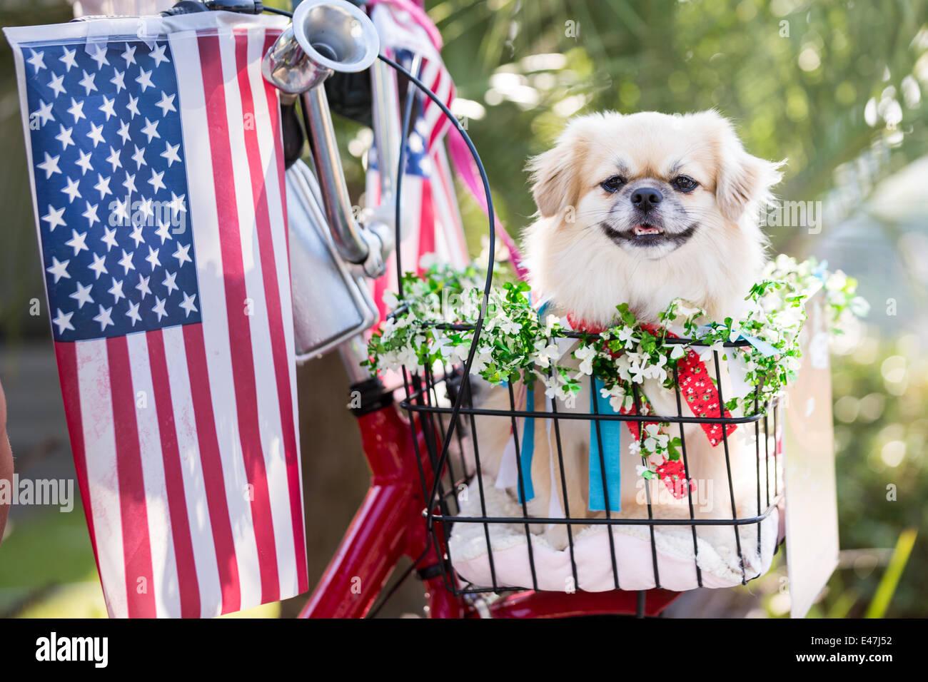 Ein Hund fährt in einem Fahrradkorb 4. Juli 2014 in Mt. Pleasant, South Carolina während der I'On Stockbild