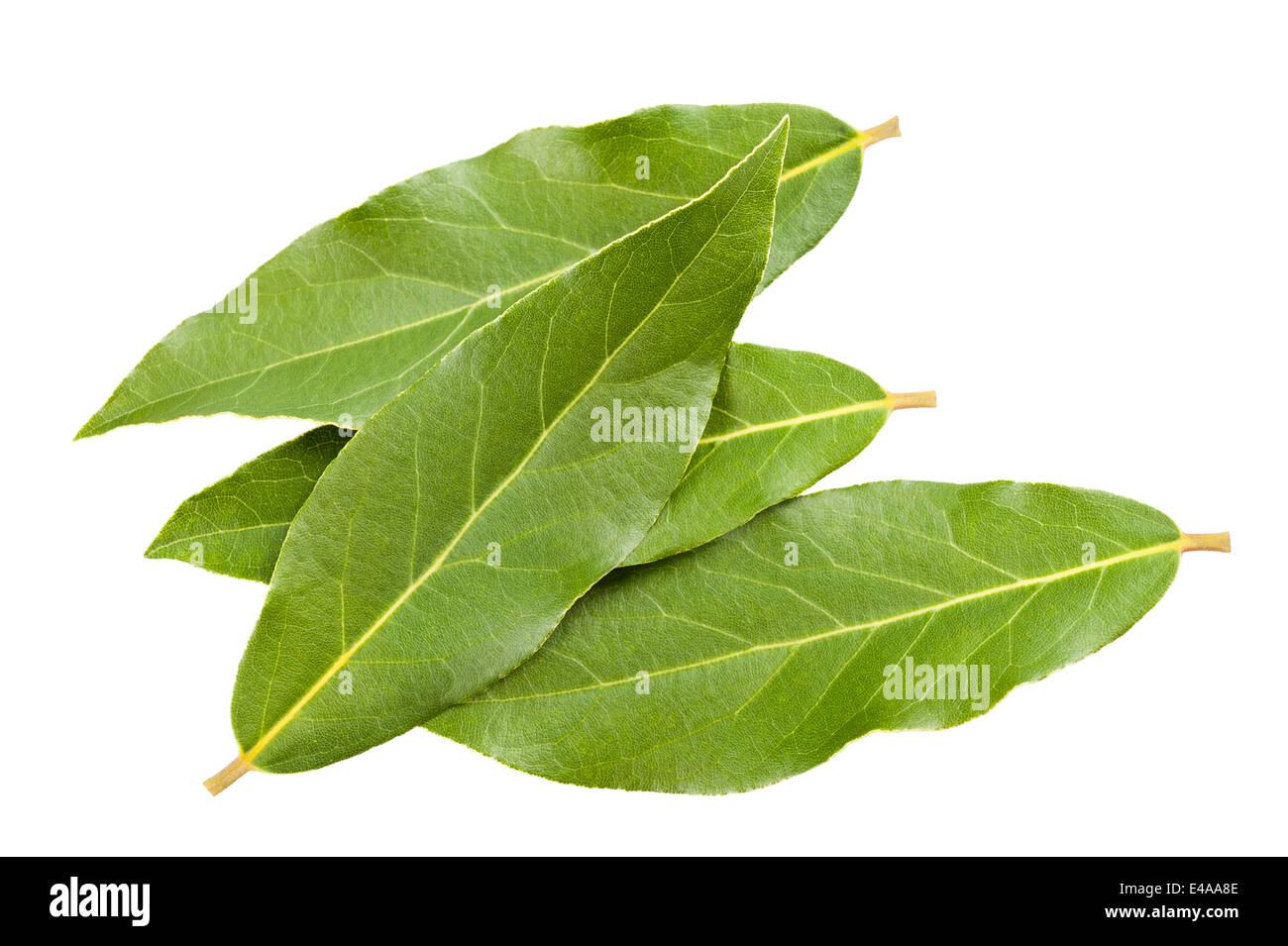 Lorbeer Blätter isolierten auf weißen Hintergrund Stockbild