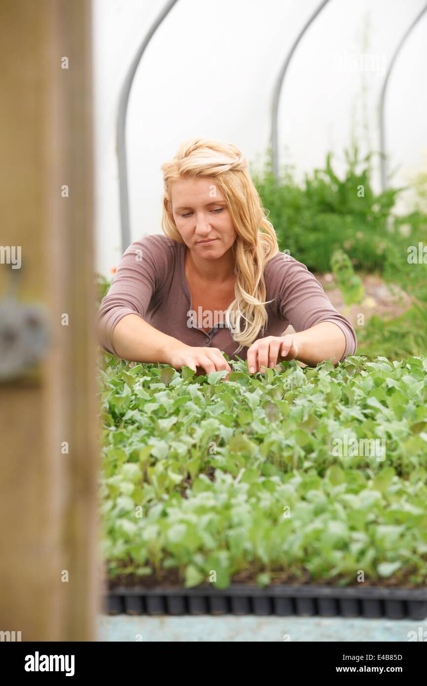 Weibliche Landarbeiter Check-Pflanzen im Gewächshaus Stockbild