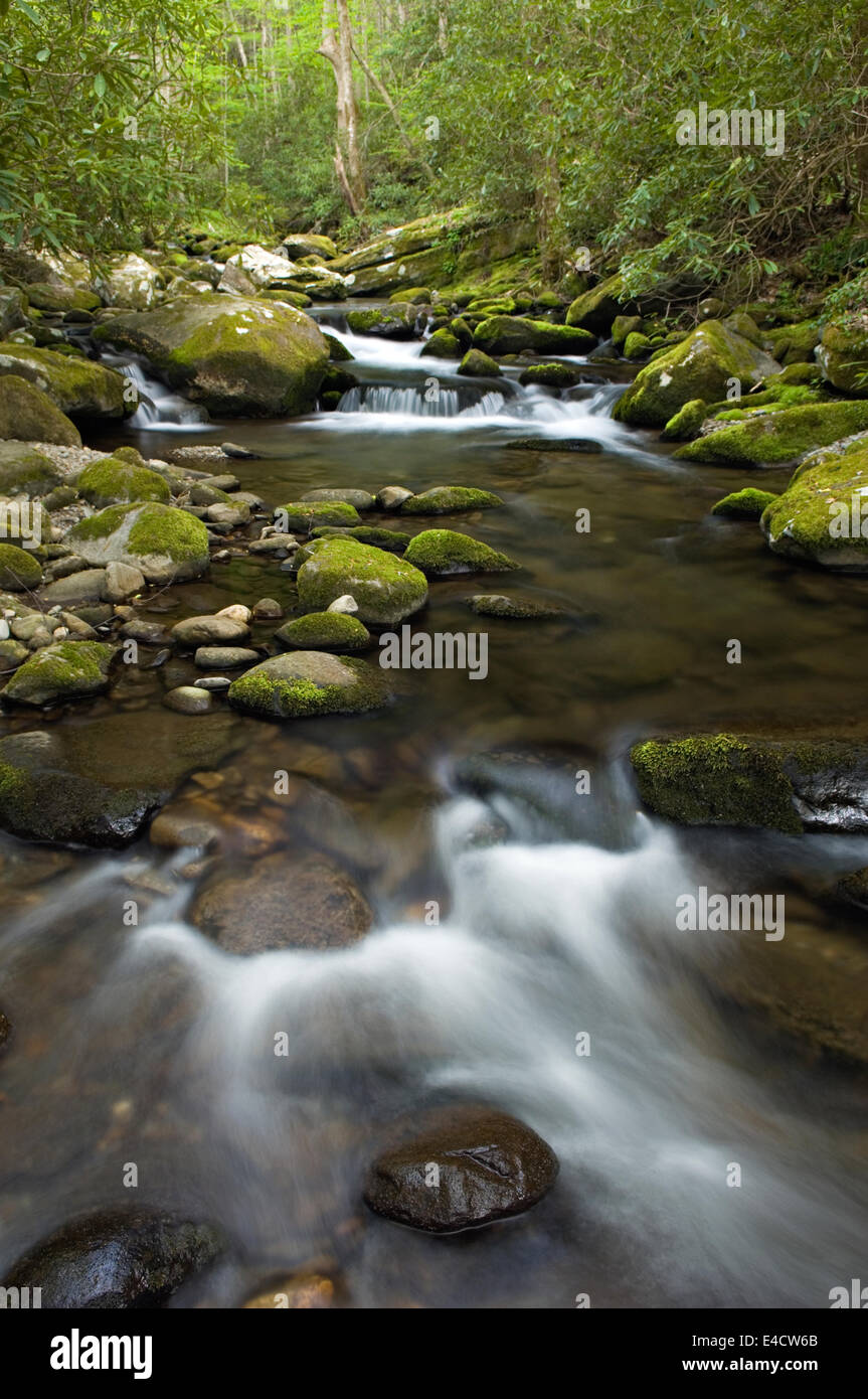 Roaring Fork Creek im Nationalpark Great Smoky Mountains in Tennessee Stockbild