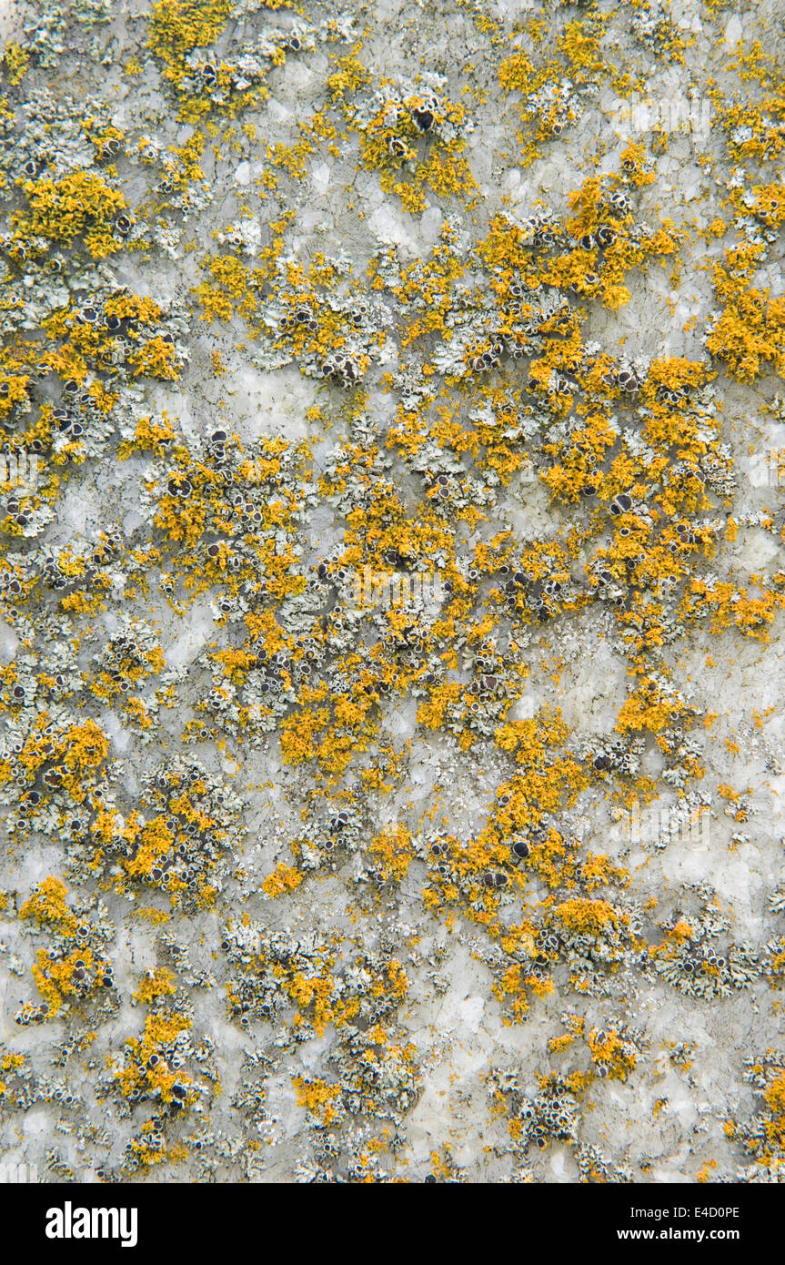 Detail der Flechten wachsen auf Grabstein Stockbild