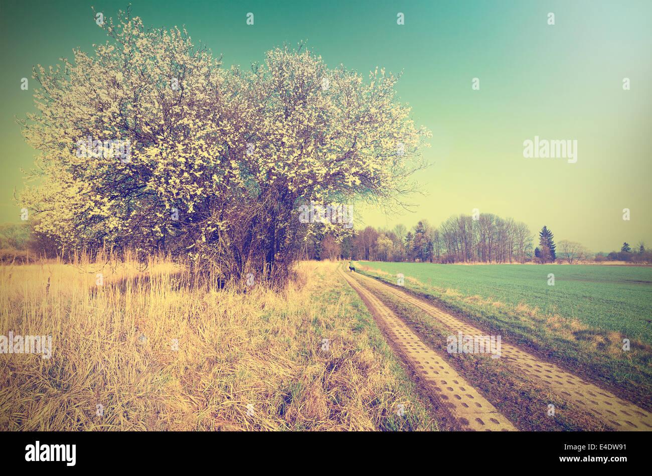 Landschaft Frühling Retro-Hintergrund. Stockbild