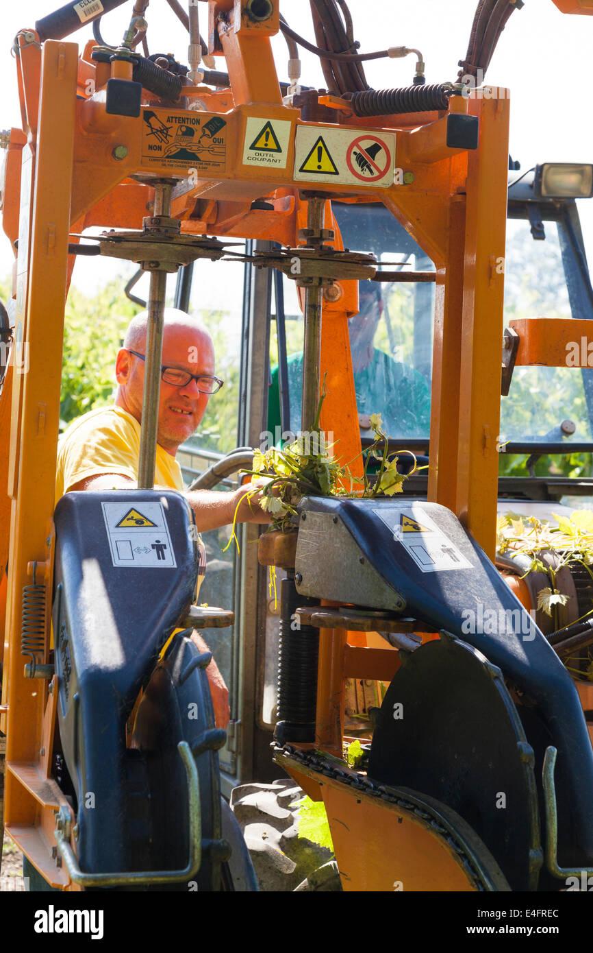 Mann clearing Weinranken aus Traktor Zweig Anhebung Mechanismus. Stockbild